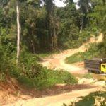 Perambahan Taman Nasional Hutan Lindung Bukit Tiga Puluh, Illegal Logging Masih Berjalan