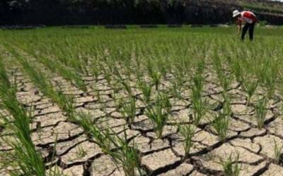 Dikabarkan Proyek Fisik Program Pertanian di Pelayang Tidak Berfungsi