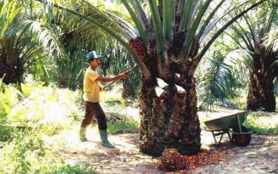 LSM Asing Gunakan Isu Deforestasi  dan pelanggaran HAM Pembukaan Lahan