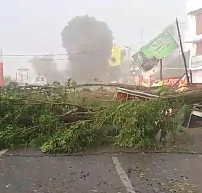 Angin Puting Beliung  Tumbangkan Pohon Besar di Kebun Jeruk