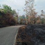 Tinggal 29 Titik Api di Tebo Berhasil di Padamkan