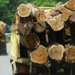 Beredar Pesan WA, Soal Pembalakan Dengan Dokumen Izin Pengelola Kayu Hutan Hak di Muara Tabir