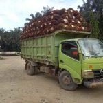Diduga Angkut TBS Curian, Truk Angkutan di PTPN Rimsa di Amankan